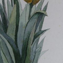 "Roy Bailey Nantucket Miniature Watercolor, ""Yellow Tulips"""