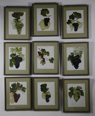 "36-3890 Set of Nine Vintage Framed, ""Grape's of New York"" Prints A_MG_4305"