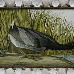 Mellie Cooper Acrylic Portrait of a Coot