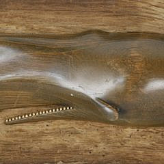 William J. Dickson Vintage Carved Wood Sperm Whale Plaque