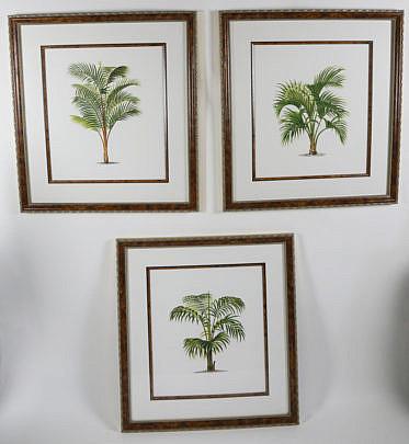 2372-955 Set of 3 Palm Tree Lithographs A_MG_6015