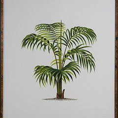 Set of 3 Large Format Palm Tree Lithographs
