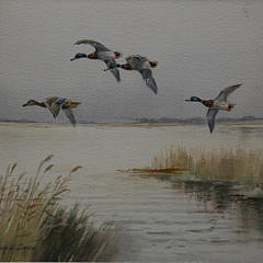 """Roland Green Watercolor on Paper, """"Four Mallard Over The Broads"""""""