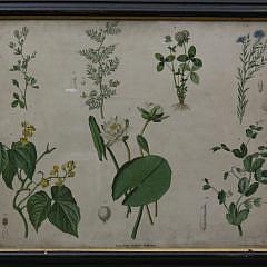 74-4795 Botanical print A_MG_5658