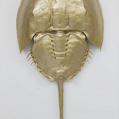 Gilded Horseshoe Crab Shadow Box