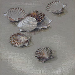 "Ruth Sumner Pastel on Paper ""Scallop Shells"""