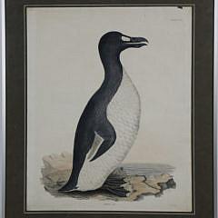 "41359 Prideaux John Selby Engraving, ""Great Auk"" A_MG_6395"
