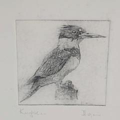 4800 David Lazarus Etching Kingfisher A_MG_8867