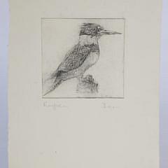 "David Lazarus Etching ""Kingfisher"""