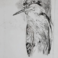 4800 David Lazarus Night Heron Etching A_MG_8860