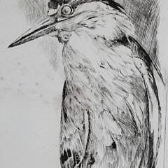 """David Lazarus Etching """"Night Heron"""""""